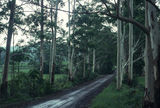 Picture relating to Bulahdelah State Forest - titled 'Bulahdelah State Forest'