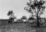 Picture of / about 'Warwick' Queensland - Cattle grazing at Wilson's Farm, near Warwick, Queensland, ca. 1897