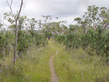 Picture of / about 'Tin Can Bay' Queensland - Tin Can Bay - Cooloola Cove area