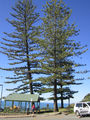 Picture relating to Burleigh Heads - titled 'Burleigh Heads - lookout'