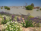 Picture relating to Menindee Lakes Park - titled 'Menindee Lakes Park'