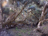 Picture of / about 'Yeal Nature Reserve' Western Australia - Yeal Nature Reserve