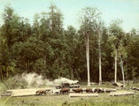 Picture relating to Canungra - titled 'Loading skids at Flying Fox Creek'