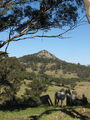 Picture relating to Little Dromedary Mountain - titled 'Little Dromedary Mountain'