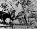 Picture relating to Cloncurry - titled 'Woman horserider in Cloncurry'