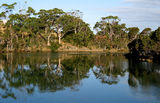 Picture relating to Wynyard - titled 'Inglis River Reflections, Wynyard, Tasmania'