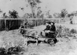 Picture relating to Chinchilla - titled 'Two boys in a goat cart, Chinchilla, 1911'