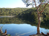 Picture relating to Blue Lake National Park - titled 'Blue Lake, Stradbroke Island  Qld.'