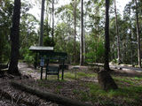 Picture relating to Bodalla - titled 'Bodalla Forest Park'