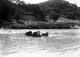 Picture of / about 'Murrumbidgee River' New South Wales and the Australian Capital Territory - Murrumbidgee River at Uriarra showing a raft made of four barrels