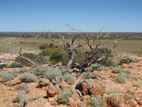 Picture relating to De La Poer Range Nature Reserve - titled 'De La Poer Range Nature Reserve'