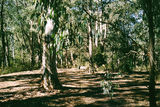 Picture relating to Delegate River - titled 'Delegate River Camp Ground, Errinundra State Forest'
