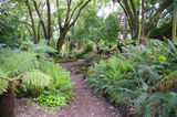 Picture relating to Daylesford - titled 'Wombat Hill Botanical Gardens Fernery, Daylesford'