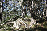 Picture relating to Mount Mackenzie - titled 'Mount Mackenzie vegetation'