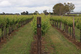 Picture relating to Coonawarra - titled 'The COONAWARRA'
