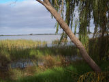 Picture relating to Racecourse Lake - titled 'Racecourse Lake'