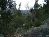 Picture relating to Booroomba Rocks - titled 'Mid elevation vista'