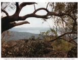 Picture relating to Figtree Hill - titled 'Figtree Hill'
