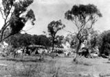 Picture relating to Barcaldine - titled 'Union camp in Barcaldine during the 1891 Shearers' Strike'