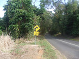 Picture relating to Cape Tribulation - titled 'Cape Tribulation Road'