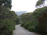 Picture relating to Mount William - titled 'Shrubs growing beside the road to the top of Mt William'