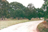 Picture relating to Little River - titled 'Little River: Ripley Reserve'