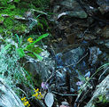 Picture relating to Black Mountain Reserve - titled 'Moss, ferns, rocks, wildflowers and running water'