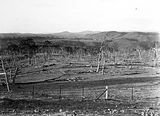 Picture relating to Mount Coree - titled 'Unidentified landscape, Forestry Camp Mount Coree.'