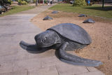 Picture relating to Thursday Island - titled 'turtle sculpture'