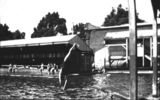 Picture relating to Queensland - titled 'Girl diving into a public swimming pool, ca. 1915'