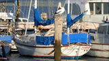 Picture relating to Hastings - titled 'Hastings Pelican on Post and Boats'