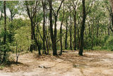 Picture of / about 'Bunyip State Park' Victoria - Bunyip State Park: Black Snake Ck bush camp area