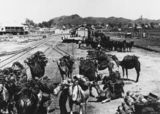 Picture relating to Duchess - titled 'Team of camels at the Railway Station in Duchess, ca.1910'