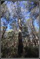 Picture of / about 'Brindabella National Park' New South Wales and the Australian Capital Territory - Brindabella National Park