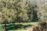 Picture relating to Dargo River - titled 'Dargo River, State Forest, Italian Flat Camp Ground'