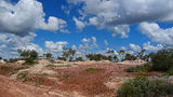 Picture relating to Lightning Ridge - titled 'Lightning Ridge Opal Fields and Diggings'