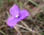 Picture relating to Blue Mountains National Park - titled 'Blue Mountains National Park flora.'