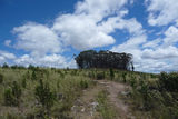 Picture relating to Penrose State Forest - titled 'Small clump of native growth forest'