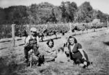 Picture relating to Ballandean - titled 'Birthday at Barbagallo's farm, 1952'