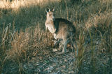 Picture of / about 'Mount Salvator' Queensland - Mount Salvator