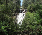 Picture of / about 'Steavenson Falls' Victoria - Steavenson Falls