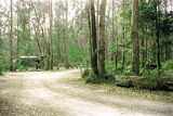 Picture relating to Bemm River - titled 'Bemm River Rainforest Walk picnic ground car park'