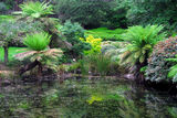 Picture relating to Dandenong Ranges National Park - titled 'National Rhododendron Gardens pond'