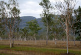 Picture of / about 'Bruce Highway' Queensland - Bruce Highway