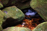 Picture relating to Watagans National Park - titled 'Gap Creek flow'