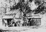 Picture relating to Stanthorpe - titled 'Tin miners and their huts at Stanthorpe, 1872'
