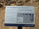 "Picture relating to Cape Bridgewater - titled 'Cape Bridgewater ""Petrified Forest"" Information Sign'"