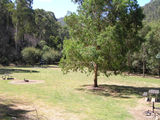 Picture relating to State Forest - titled 'State Forest, Mitta Mitta; Lightning Creek Camp Ground'