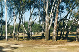 Picture relating to Burramine North - titled 'Burramine North: Murray Rv Reserves; Bourkes Bend 3'
