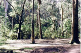 Picture relating to Murrindindi River Scenic Reserve - titled 'Murrindindi River Scenic Reserve; Water Gauage Camp Ground'